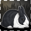 Icon avatar of a black Dutch rabbit.