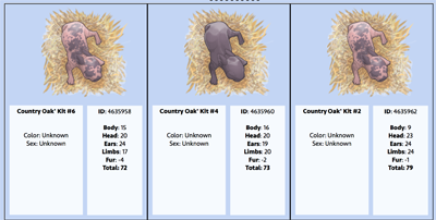 Screenshot of newborn kits.