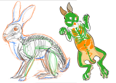 Drawings showing the skeleton inside of a rabbit.