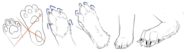 Drawings of improper pink footpads and proper furry footpads.