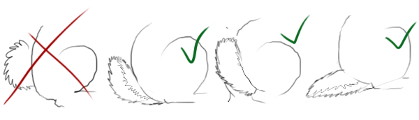 Drawings showing an improper cottonball tail versus proper deer-like tails.