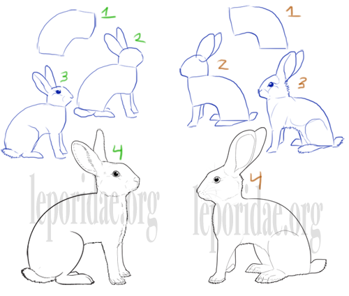Drawings of full arch rabbits.