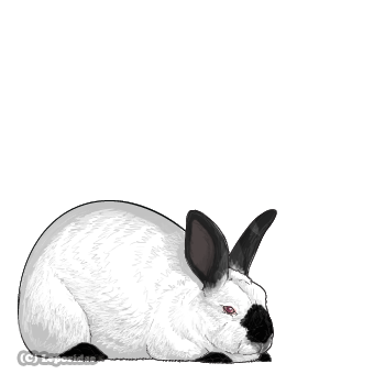 Large chubby rabbit with beady red eyes, white fur, black nose, ears, feet, and tail.