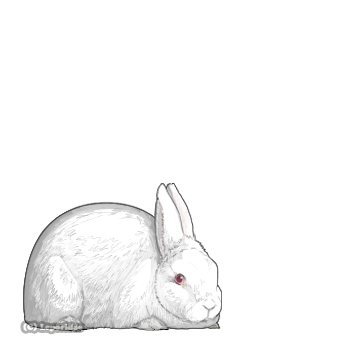 The most basic white rabbit with red eyes.